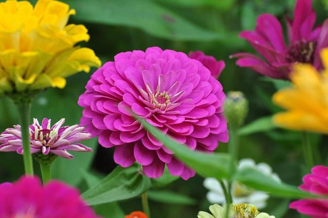 春天播种的花卉有哪些?