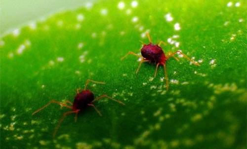 春天花卉最容易得的几种病虫害