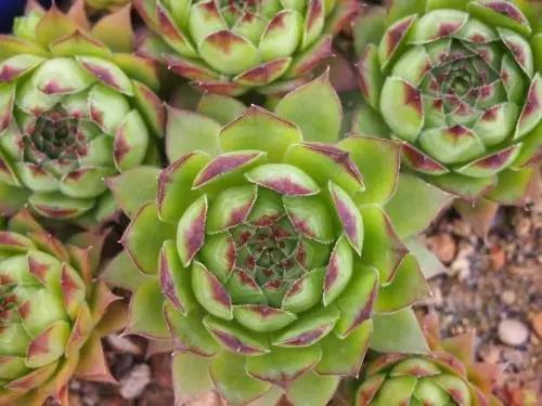 40种多肉植物的秋季养护经验