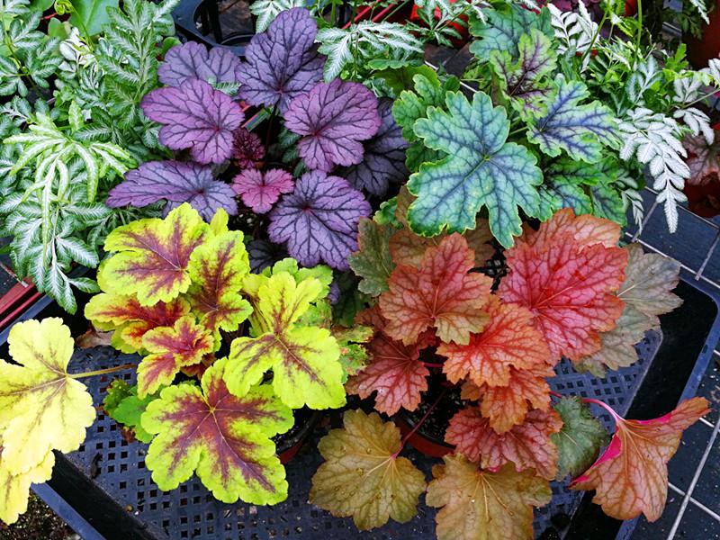 别养绿萝了,试试这几种,观叶植物中的颜值担当!