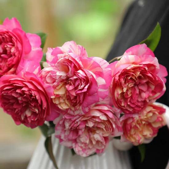 适合做花墙的藤本月季品种推荐