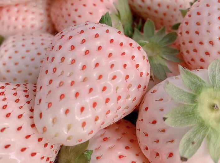 耐晒的草莓品种有哪些?