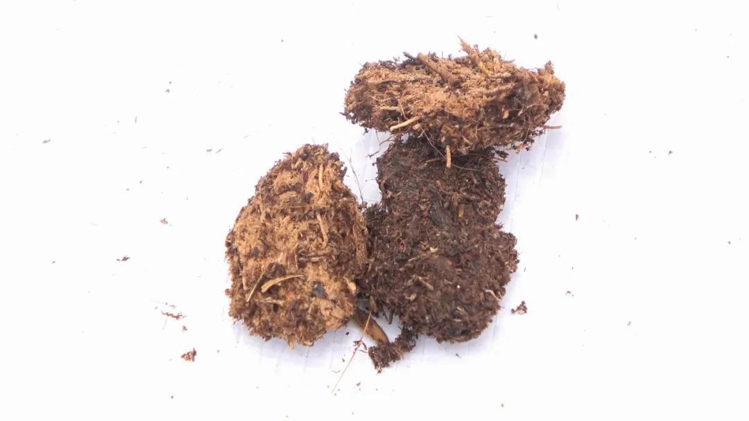 月季种植用什么土好?