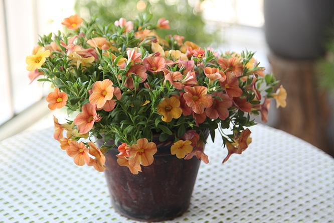 夏季给植物浇水的最佳时间