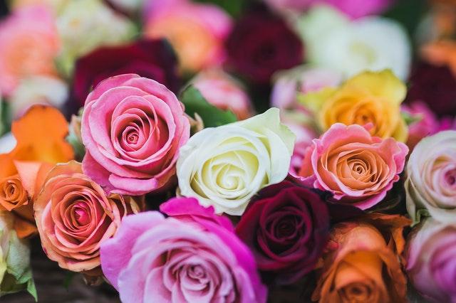 不同颜色玫瑰的花语
