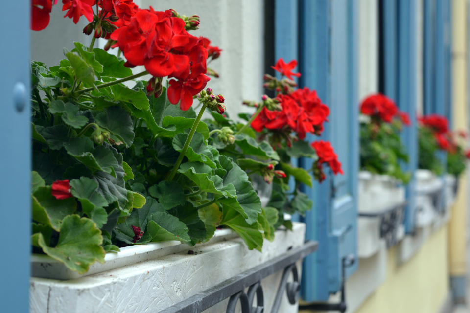 夏季高温植物萎焉没精神?做好防晒降温很重要!
