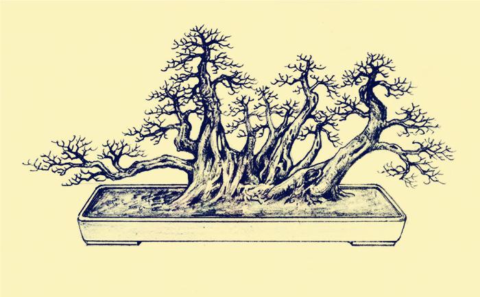 丛林式盆景制作技艺要点布局