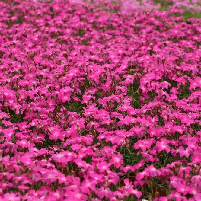 适合春天种植的11种花园植物