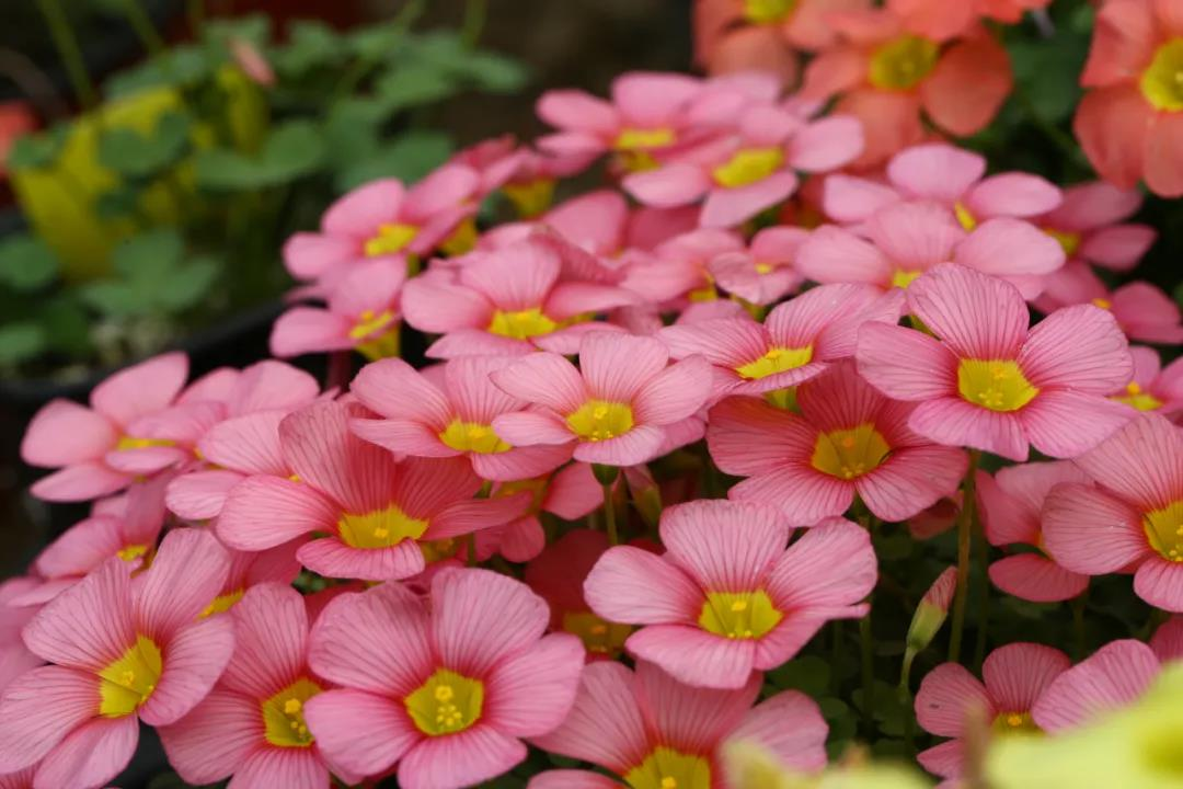 适合新手养的花有哪些?