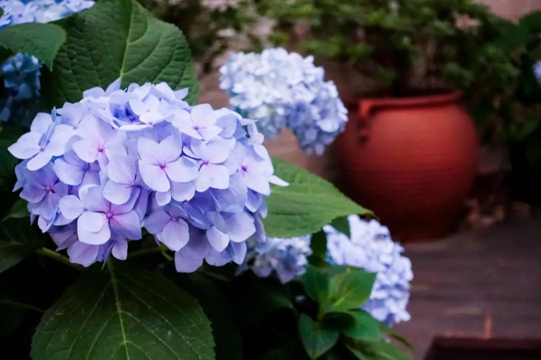 秋季如何养花?记住这8点明年开爆盆!