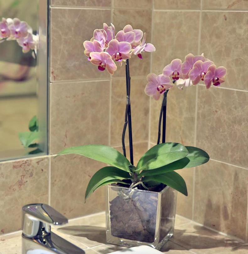 蝴蝶兰的养护方法