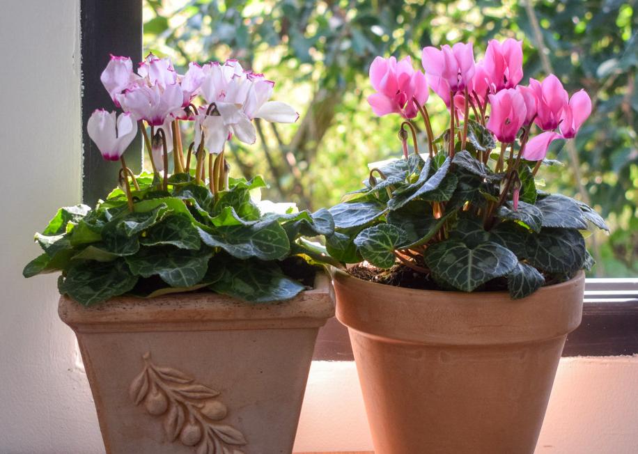 冬天开花的植物有哪些?