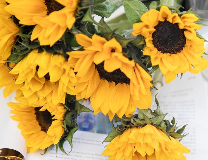 鲜切花向日葵的养护要点