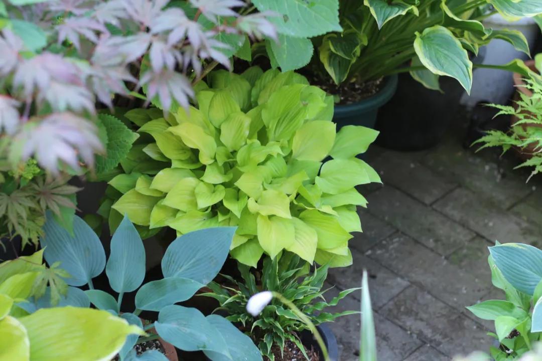 耐阴又能观叶赏花的植物有哪些?