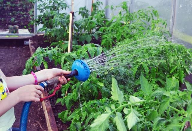 盛夏怎么给植物浇水才正确?学会这几点,夏天浇水不犯愁!