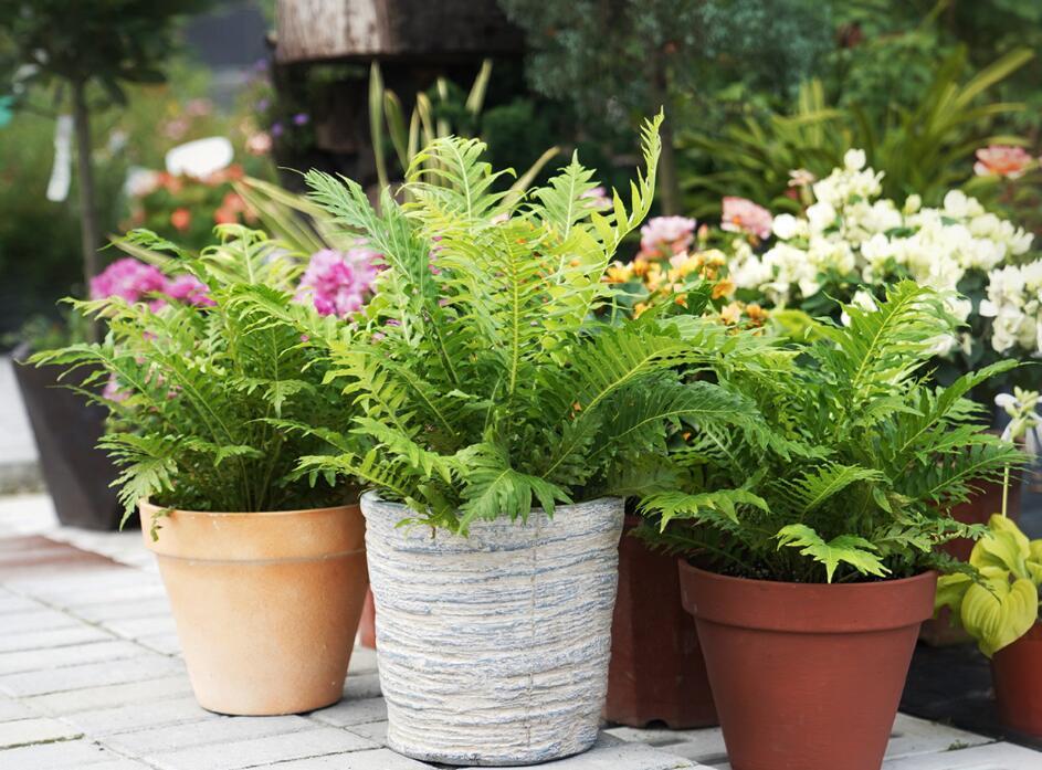 夏天盆栽如何浇水?