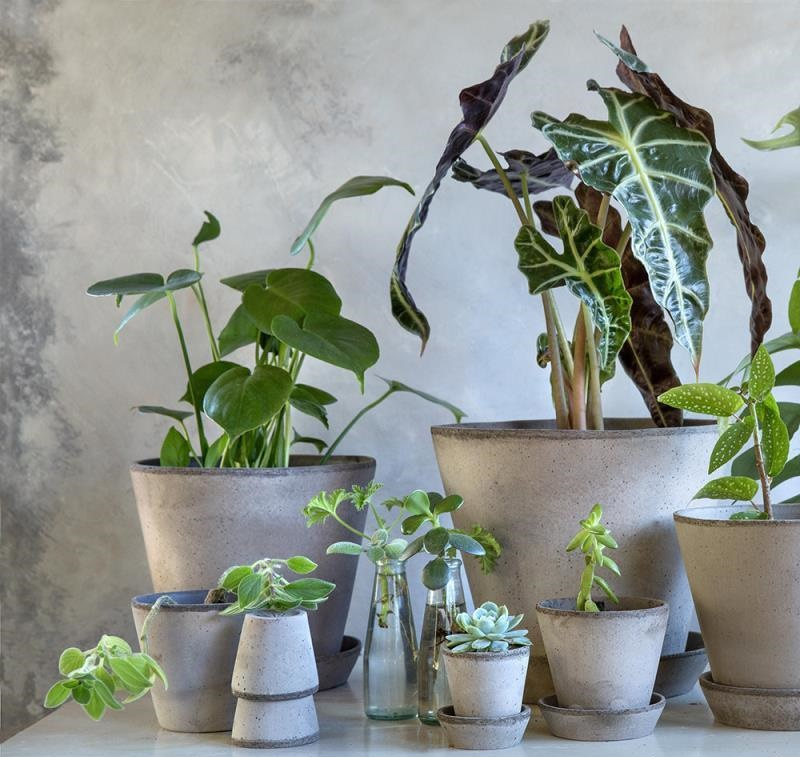 夏天闷热怕植物闷根,如何选择一款适合植物的容器呢?
