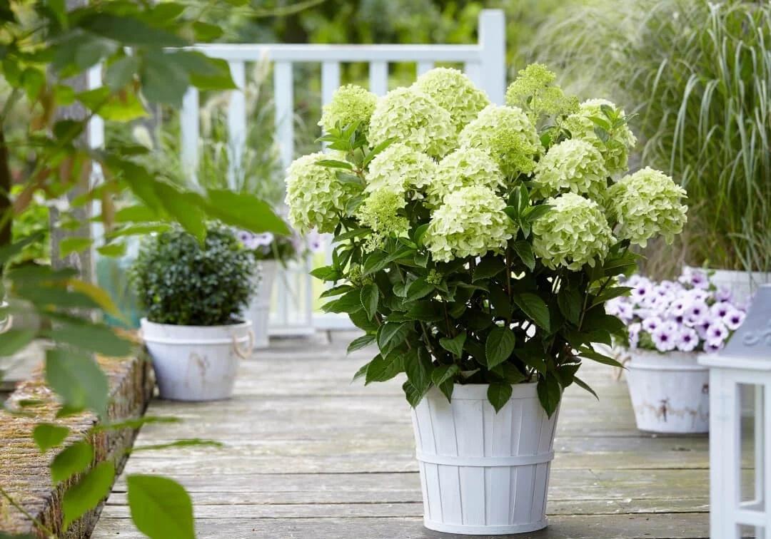 喜阳、耐晒的植物有哪些?南向阳台植物搭配方案!