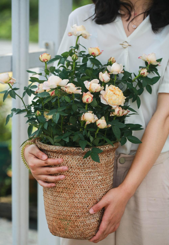 缤纷小玫瑰图片