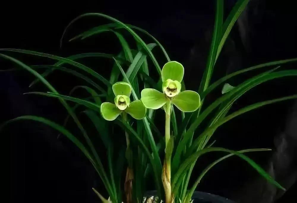 兰花品种繁多,这15种兰花你都认识吗?